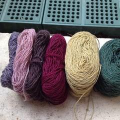 Ho scelto i colori per il prossimo scialle #iolavoroamaglia #instaknit #knitting #knittingfriends #fattoamano #handmade #heidikirrmaier #yarn