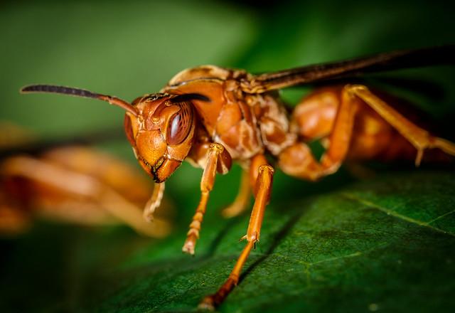 bug, macro