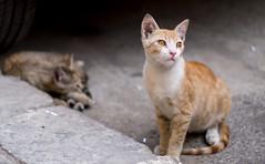 Cats, Valletta