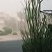 Canon EOS 1N - Dust storm shot
