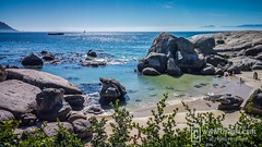 Boulders Beach Penguins by uyaphi