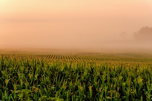 columbus field fog wisconsin sunrise corn ©jrj