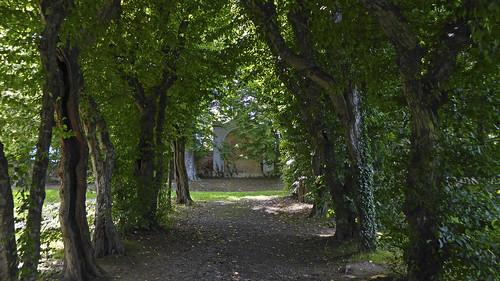 park trees austria avenue styria allee pöllau