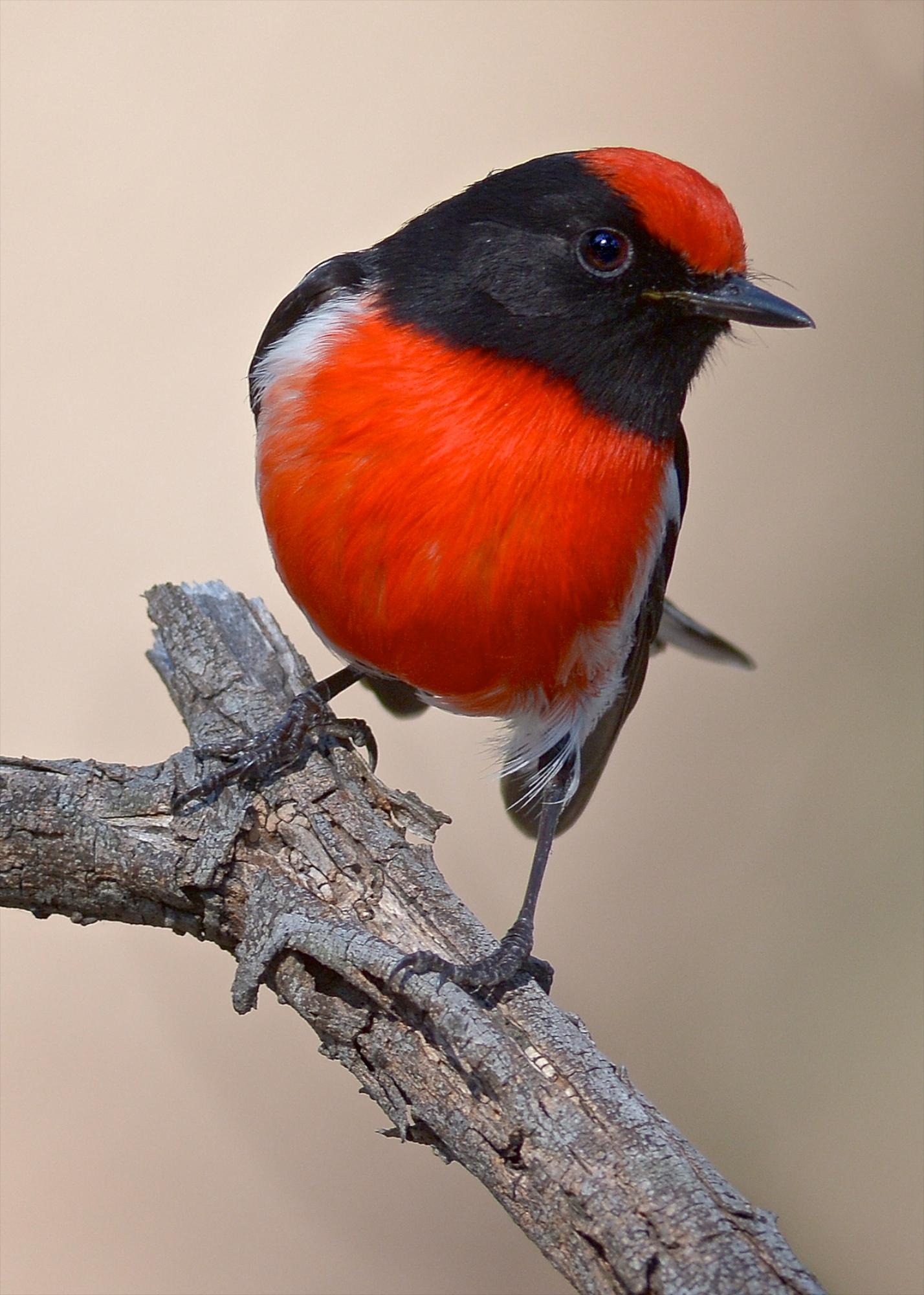red bird nest and - photo #31