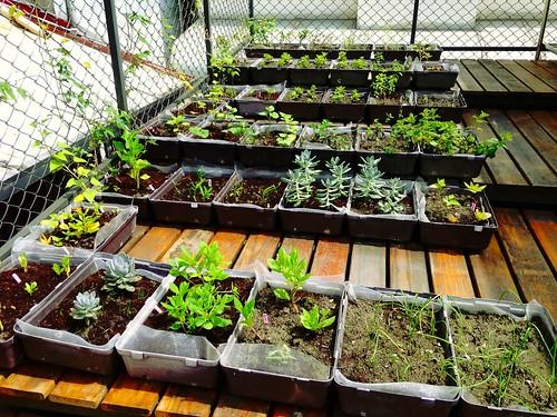 一個在屋頂種菜的夢想,促成一棟老屋成功完成節能改造。圖片來源:鍾明靜