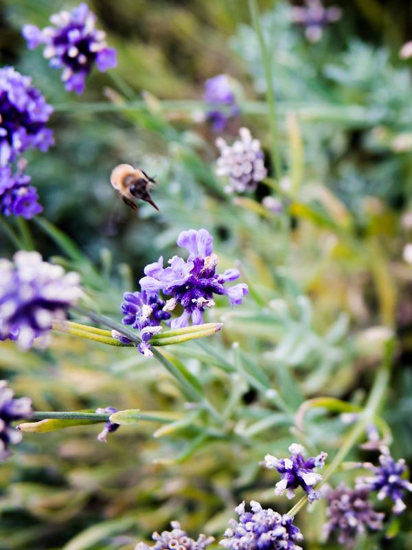 rooftop bees royal york toronto