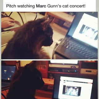 Another #cat who enjoyed my concert. Yes, cats love Irish Drinking Songs for Cat Lovers too. http://catdrinkingsongs.com