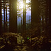 Sunset On Summer by FujiChallenger