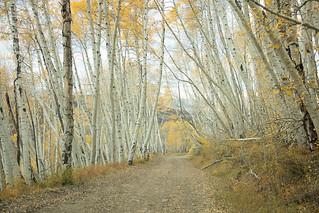 Autumn on Last Dollar Road