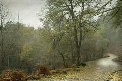 el valle / otoño