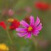 Pastel Flower Garden...