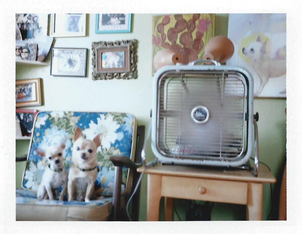 two chihuahuas, a fan... and a painting of a chihuahua.