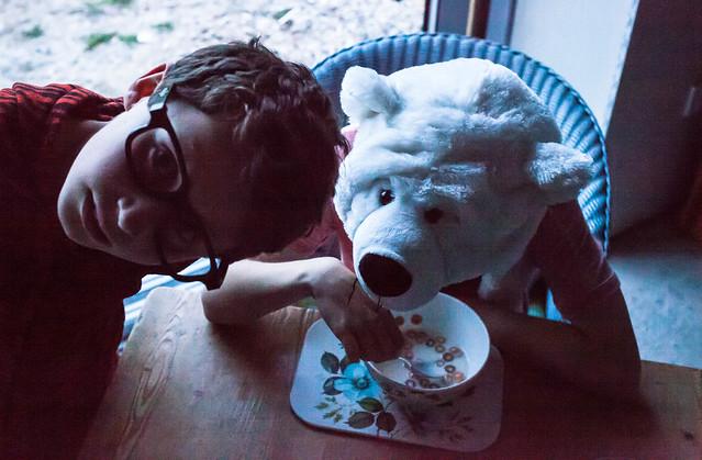 Polar bear eating ceral