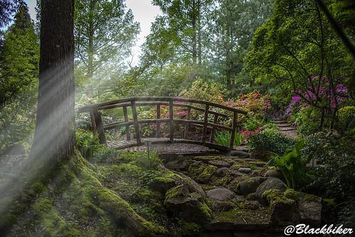 Light power in the garden