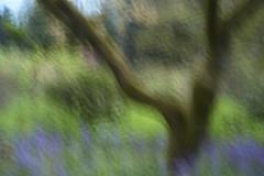 Springtime beneath the tree