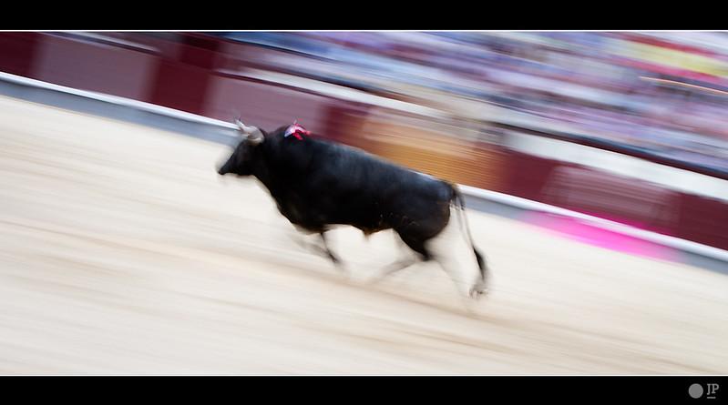 toro-aleatorio