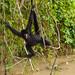 Peruvian Amazon | Libertad Jungle Lodge by ardenstreet