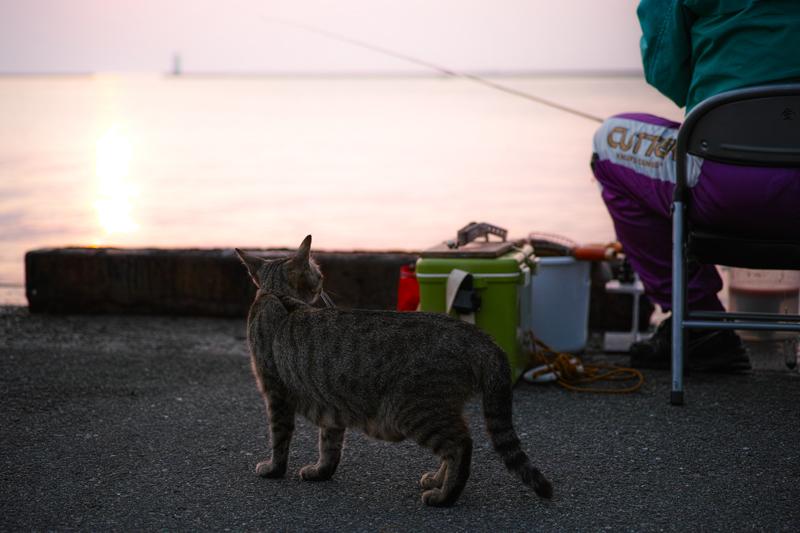 Cat Memories 2014/06/18
