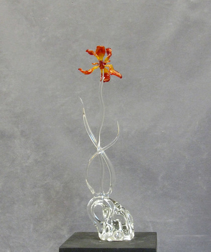 flowers iris flower august lass 2011 ronniehughes sunriseiris fromseedsand fromseedandsand