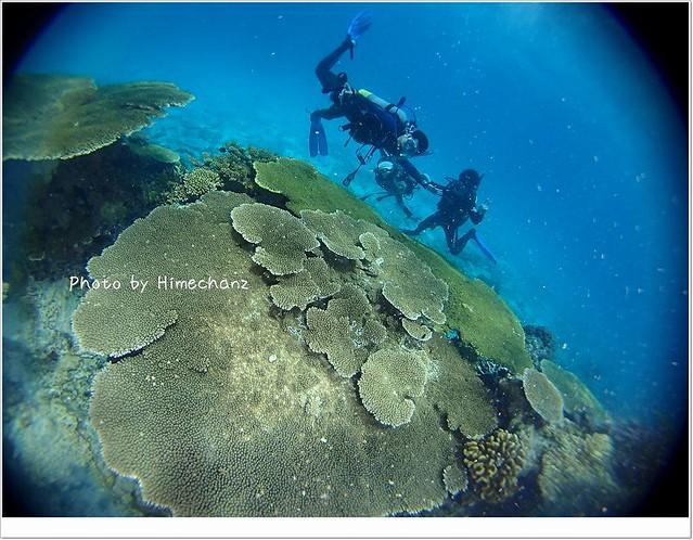 巨大サンゴが沢山ありました!