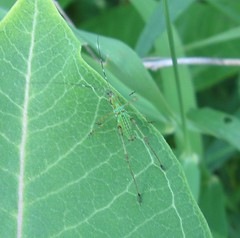 plant stem(0.0), arthropod(1.0), animal(1.0), leaf(1.0), invertebrate(1.0), insect(1.0), macro photography(1.0), green(1.0), fauna(1.0), close-up(1.0), plant pathology(1.0),