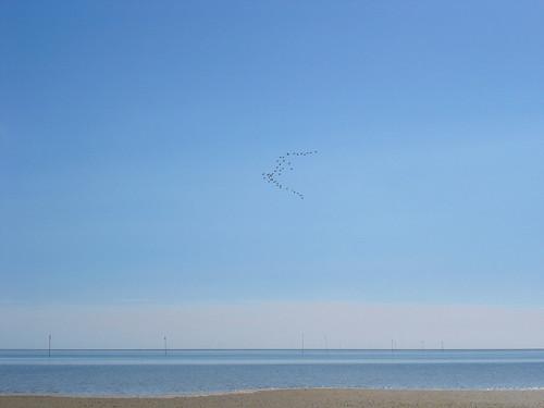 Nordsee Amrum