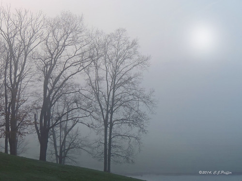 """Trees in Morning Fog"""
