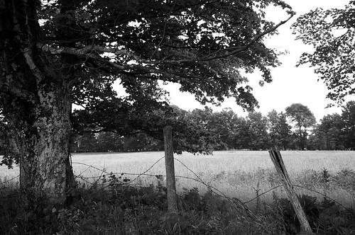 bw tree blackwhite nikon noiretblanc arbre stansted 2014 easterntownships cloture d90 fitchbay cantondelest nikond90 nikkor18300mm champfield aperture3