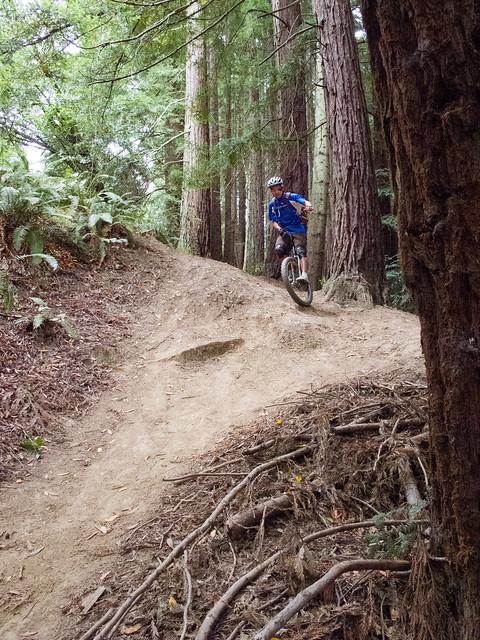 Steep chute in the redwood grove