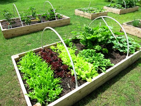 garden2-0714