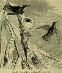 "Image from page 483 of ""Reptiles and birds : a popular account of their various orders, with a description of the habits and economy of the most interesting"" (1883)"