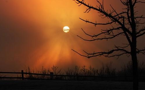 macro birds fog sunrise canon landscape dallas nikon texas wildlife flash 14 100mm irving 16 20 fullframe 13 extender 400mm northtexas trinityriver 550d 1d4 560mm t2i 5d2 450dxsi 5dii 1dmkiv 1dmk4 randyecrispphotography randycrisp randyecrisp