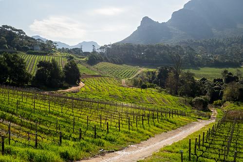 southafrica vineyard olympus capetown omd winefarm westerncape constantia em5 olympus17mmf18 constantiaglen