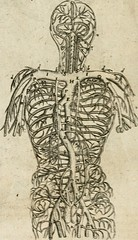"Image from page 103 of ""Anatomiae amphitheatrvm effigie triplici, more et conditione varia, designatvm"" (1623)"