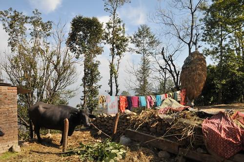 WSF004_201302_HH_Nepal_19