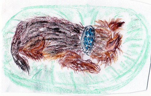 "Psycho Art - Drawing Under The Influence ""Lorazepam Sleeping Yorkie"" (Crayons)"