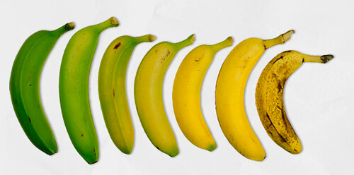 banana lifecycle