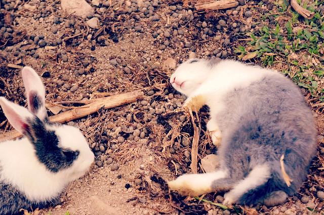 Cameron Highlands: Taman Agroteknologi Mardi