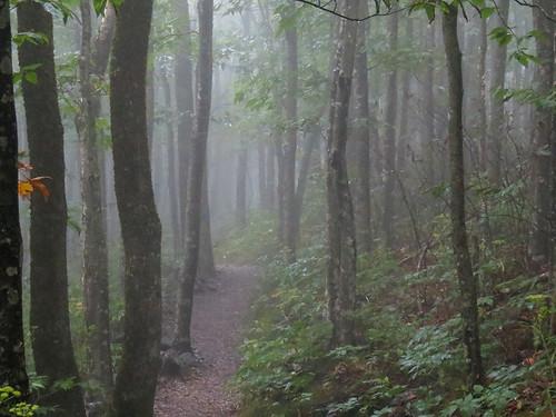 landscape northcarolina westernnorthcarolina southernappalachians elkknobstatepark canonpowershotsx40hs