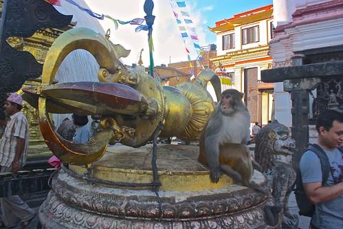 a Monkey Temple monkey... so evil he looks