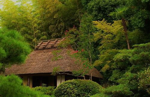 japan traditional zen 日本 寺院 kioto albero 寺 japon baum giappone templo tempel giapponese japonés japanesetemple 寺廟 等持院 侘寂 albol