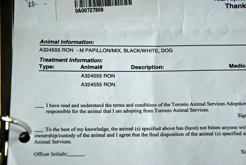 Information kept, Toronto Animal Services receipt for Toby formerly called Ron