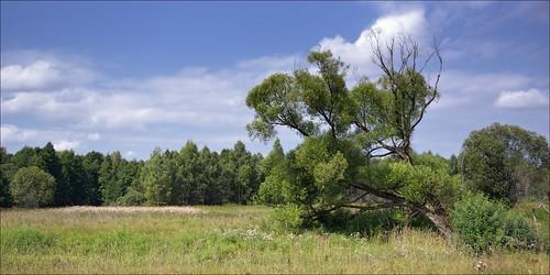 nature landscape nikon