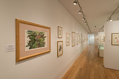 Inspired by Kew in the Shirley Sherwood Gallery of Botanical Art