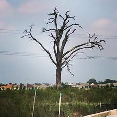 Joshua tree #nuffsaid