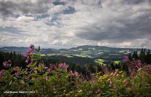 Black Forest landscapes # נופי היער השחור