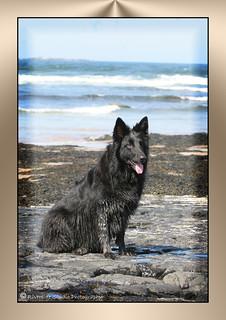 Kizzy The Sea-Dog