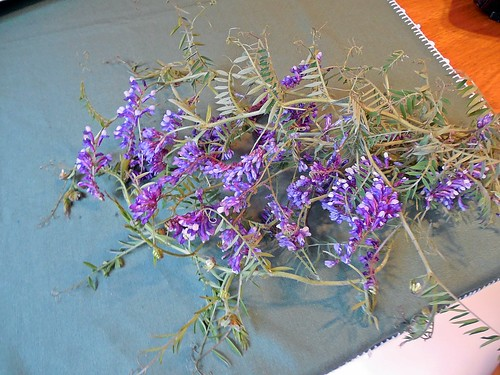 flores silvestres de vicia villosa