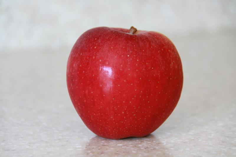 orchard (9)