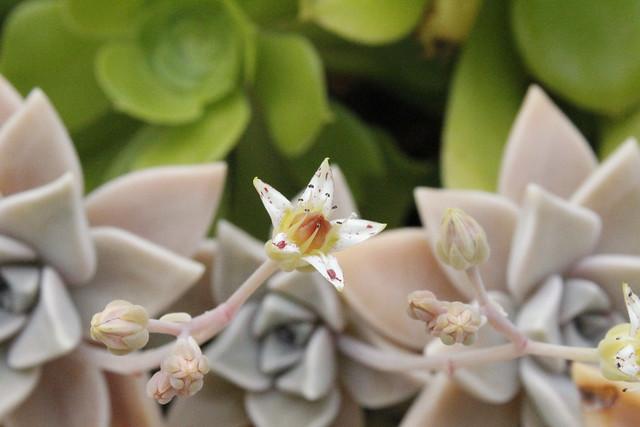 detalle flor blanca de flor carnosa gris #naturaleza